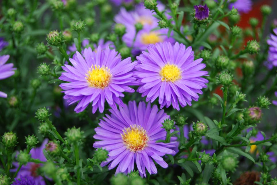 Top Most Beautiful Flowers with Medicinal Benefits for Beauty!!