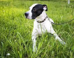 Pet Meds Online: Can You Buy Them Online?